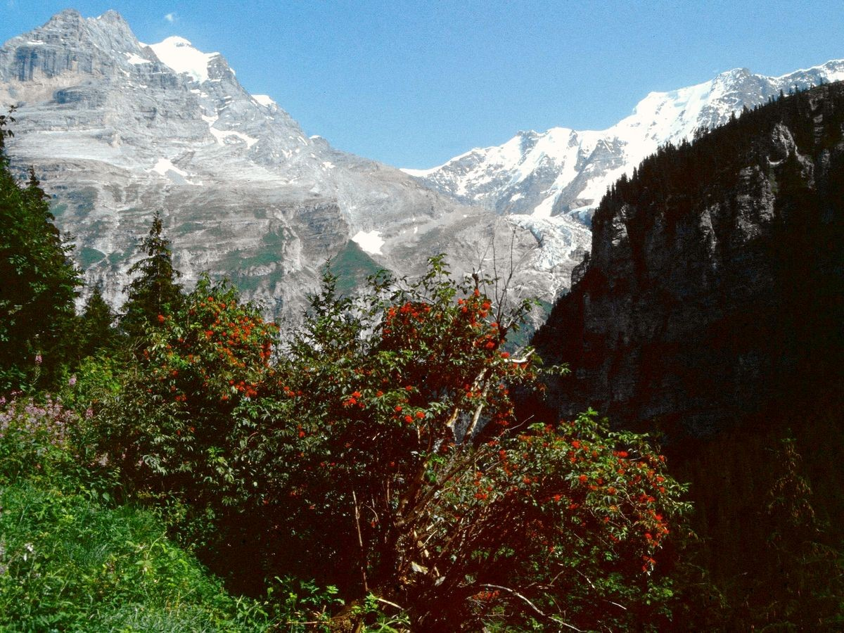 Aussicht vom Weg nach Gimmelwald auf Jungfrau und Rottal