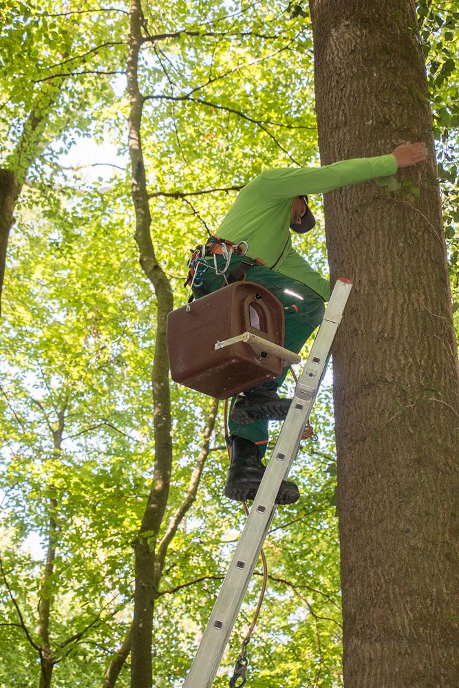 14 kg müssen den Baum hoch
