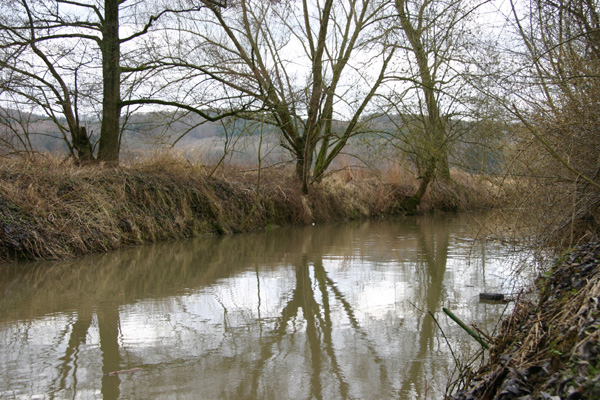 Typischer Bachufer-Bewuchs entlang der Elsenz (Foto B. Budig, 02.02.2008).