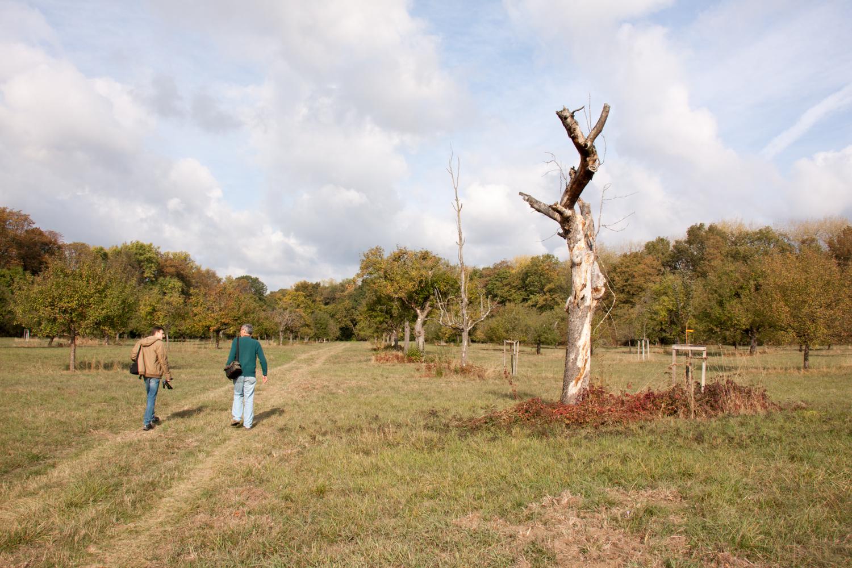 Streuobstwiese mit abgestorbenen Bäumen