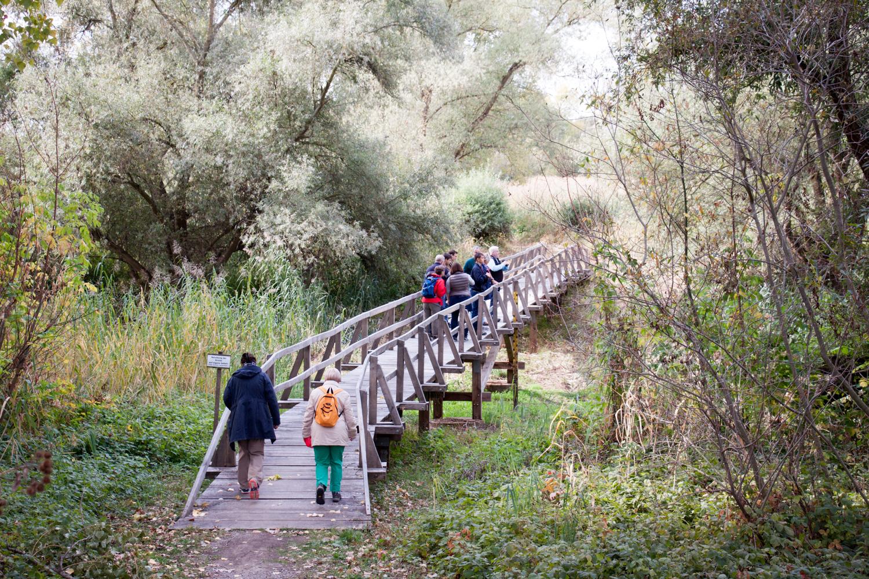 Brücke am Rallengraben