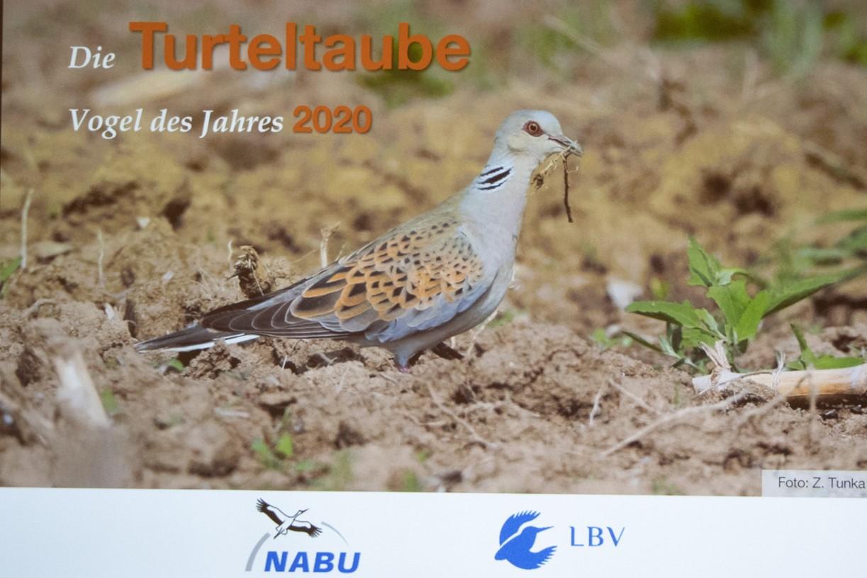 Thema des Vortrags - die  Turteltaube (Foto: B. Budig)