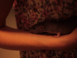 rats are nice