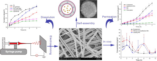 Overview production and results of self-assembled liposome from multi-layered fibrous mucoadhesive membrane
