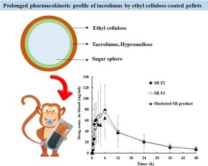 Graphical explanation of thyl cellulose-coated sustained release multiple-unit system and in vivo study results