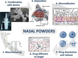 Formulation strategies and manufacturing techniques for nasal powders are explained,