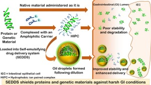 Graphic which explains the mechanisme of self-emulsifying drug delivery systems protecting proteins or DNA