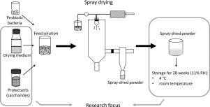 Research aimed to examine the effect of different drying media and protective excipients on the viability of the prototype probiotic strain