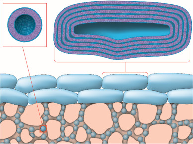 Schematic illustration of the phospholipid vesicle-based permeation assay