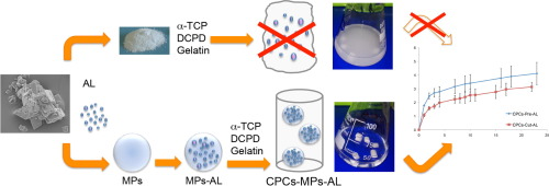 Solid Lipid Microparticles (MPs)  as carrier for bisphosphonates due to the favourable biocompatibility and lower toxicity of the lipids compared with many polymers.
