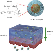 Graphic of hydrophilic high charge density core-shell nanocomplex