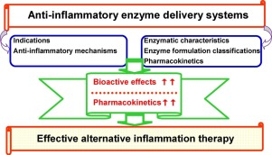 Graphic on relevance of enzymes for inflamation therapy