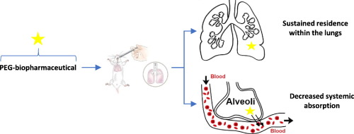 PEGyliation of biopharmaceuticals to improve pulmonary delivery