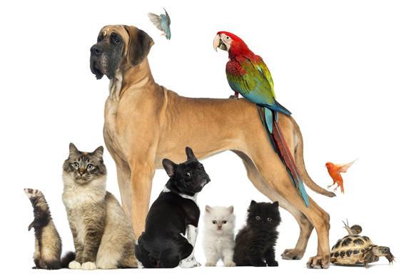 Programas TPV para Tienda de Animales y Mascotas