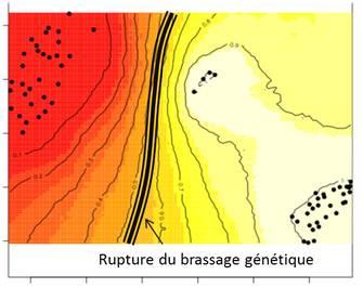 exemple d'analyse effectuée avec geneland indiquant une rupture du flux de gène qui correspond à la présence d'une barrière géographique aux déplacements des individus