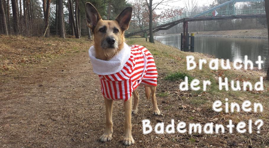 Bademantel für Hunde - kontrovers?