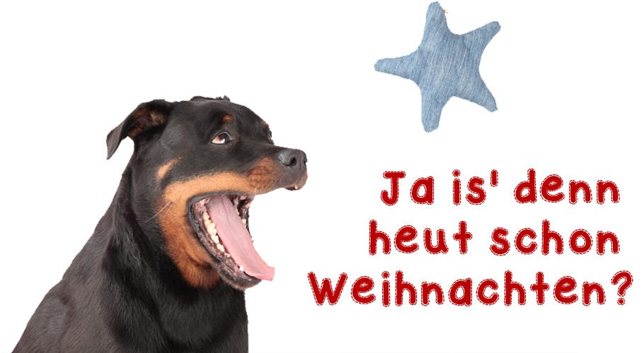 Weihnachten UNIQUE DOG