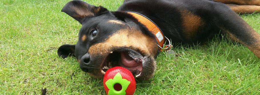 Öko Hundespielzeug im Test: Planet Dog