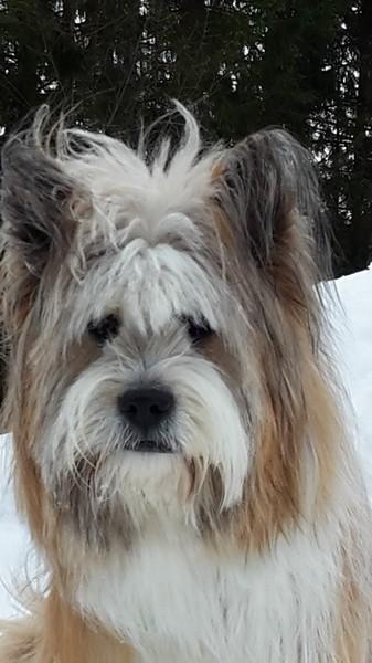 Hund lang wuschelig wenig haarend