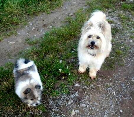 Zwei Klein-Elos in Rau -Milou 3 Monate alt, Lolli 11 Jahre alt