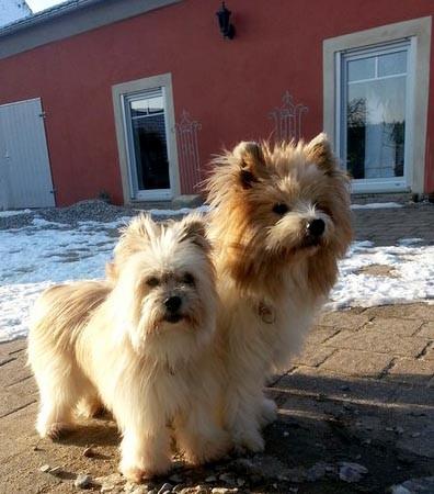 Wuscheliger Familienhund kinderlieb