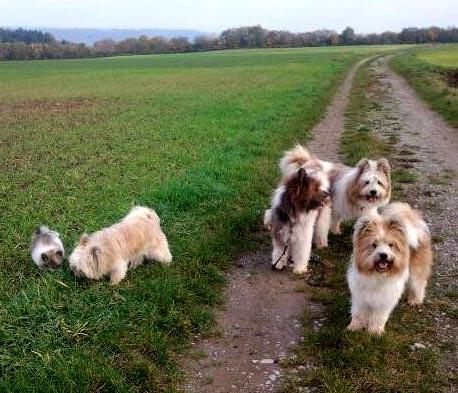 Familienhund Elo in Rau, Groß und Klein.