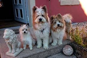 Familienhund Elo Rau wuschelig klein mittel groß