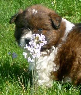 Die 5. Woche   Auf unserer Blumenwiese...