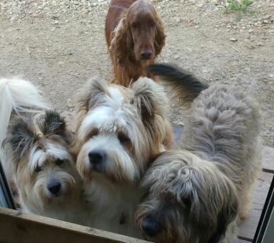 Chianna und Pookie mit Emma (rechts) und Ginger (hinten).