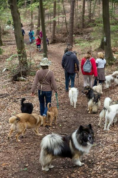 Familienhund Elo Glatt Rau Verein EZFG Zucht Welpe