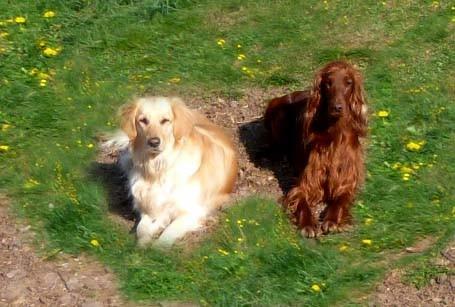 Kaleigh und Ginger - sie kannten sich  vorher nicht, haben sich aber auf Anhieb gut verstanden.
