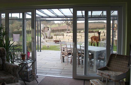Zwei Alpakas auf der Terrasse.