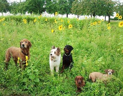 Pookie bei ihren Kollegen Lucky und dem Rotti Cap.
