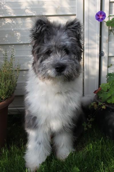 Groß Elo Rau Familienhund
