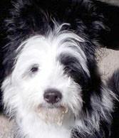 Welpenschule Elo Welpenspielen Familienhund Welpe erziehen