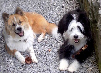 Familienhund Elo glatt rau wuschelig langhaar groß mittelgroß