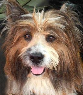Elo Rauhaar Familienhund Franken Therapie
