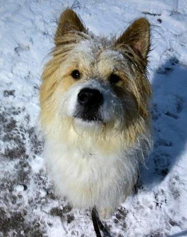 Elo Rauhaar Shari von Werths Echte Kind und Hund