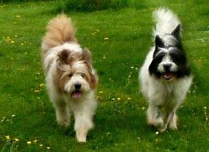 Pookie und Philina-Lilly - zwei hübsche Schwestern.