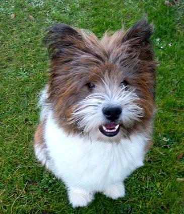 Familienhund Elo wuschelig aus Franken