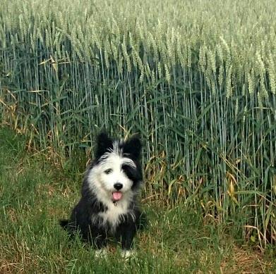 Elo Rau wuscheliger Familienhund mittelgroß Kinder