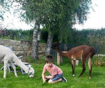 Kind Alpaka Elo Familienhund Therapie
