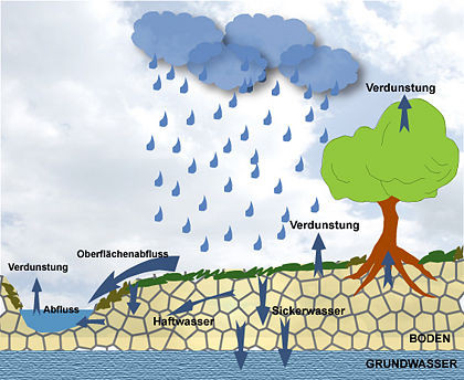 Wasserkreislauf und Boden