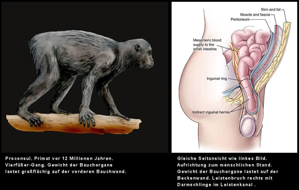 Ungewöhnlich Oberflächenanatomie Der Bauchorgane Fotos - Anatomie ...