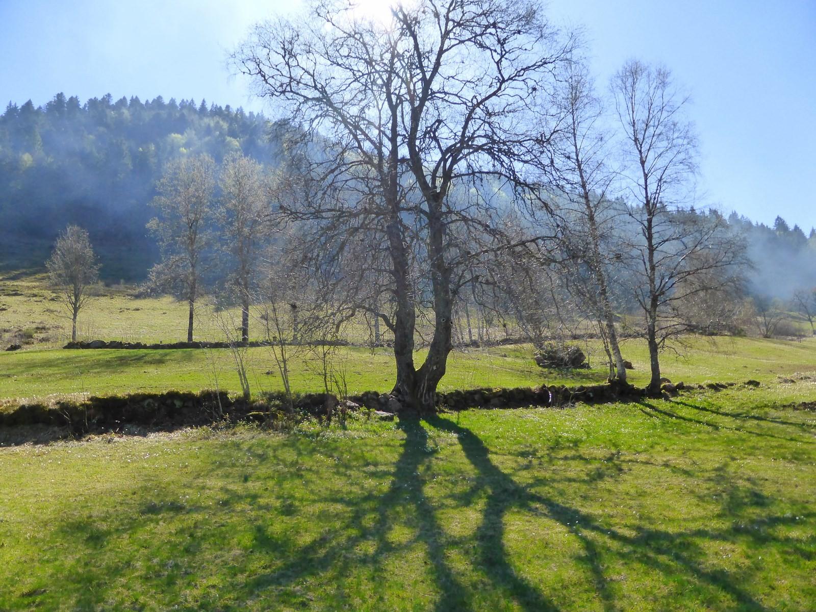 Vorfrühling im Krunkelbachtal Copyright Hartmut Hermanns