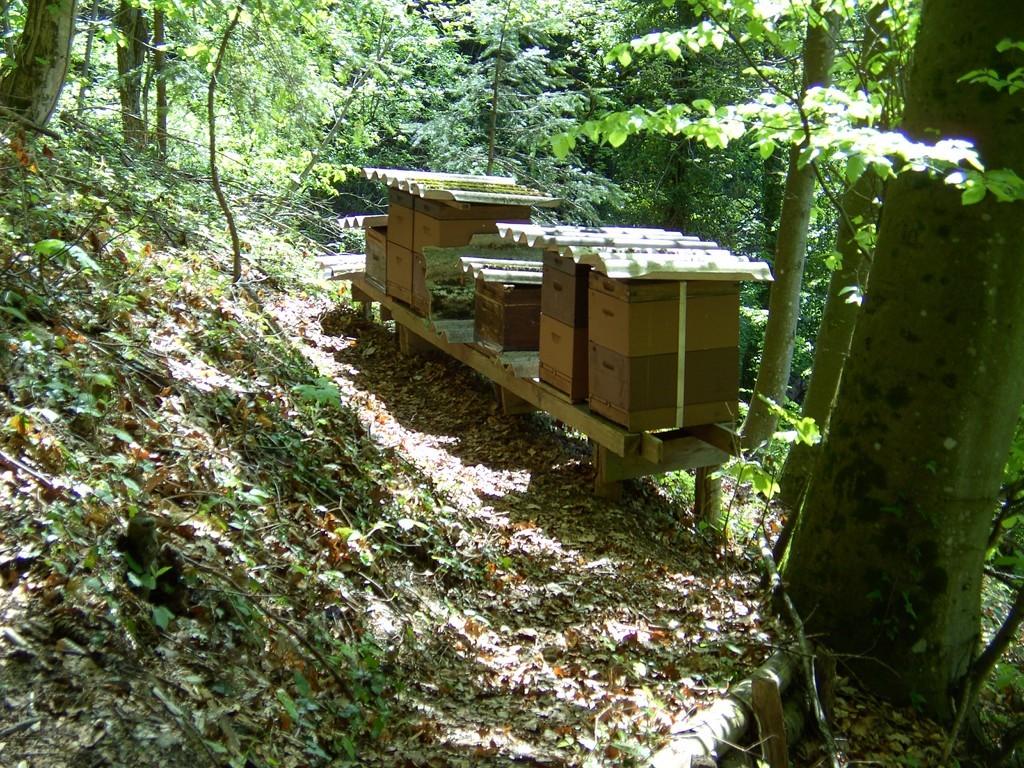 Bienenstöcke warten auf Bewohner   ©   Hartmut Hermanns