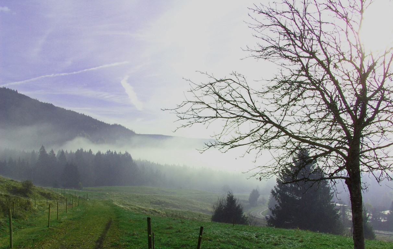 Morgenstimmung beim Ankenbühl  © Hartmut Hermanns
