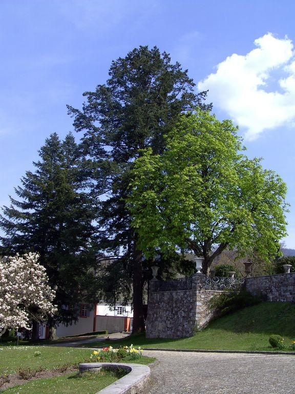 Im Schlosshof Bürgeln