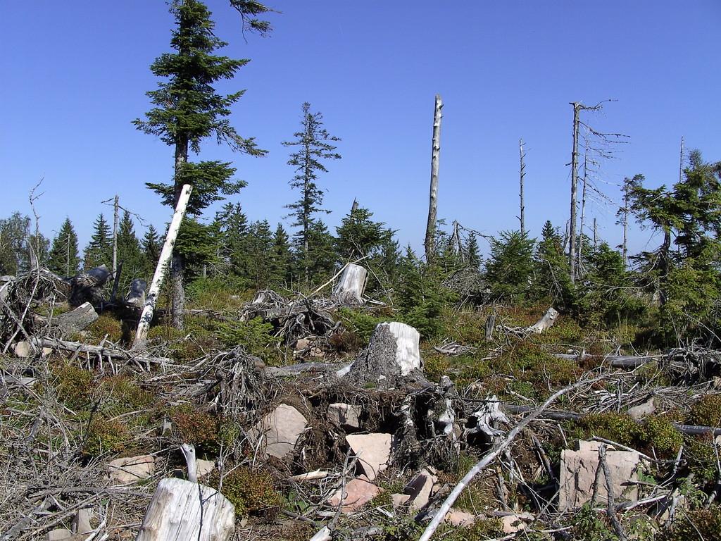 Waldzerstörung auf der Badener Höhe   © Hartmut Hermanns