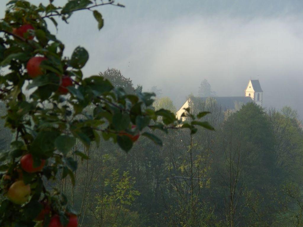 Altsimonswald im Morgennebel © Hartmut Hermanns